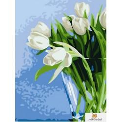 Бели лалета